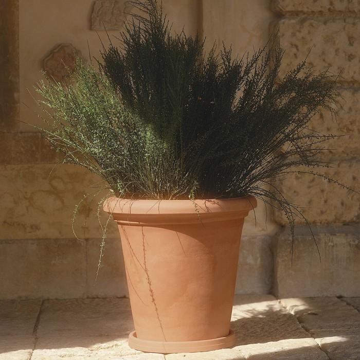 Camelia Pot - 38 cm with saucer
