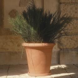 Vaso Camelie liscio cm. 23 c/sottovaso